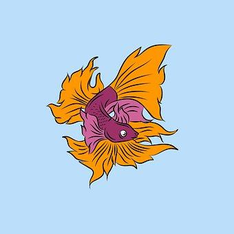 Betta, Siamese Fighting Fish, Fish