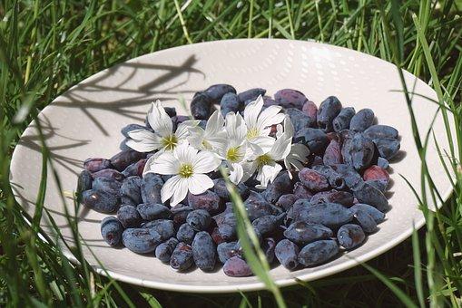 Black Berries, Flowers, White Saucer, Haskap Berries