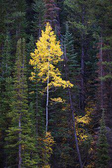 Forest, Pine Trees, Trees, Foliage, Pine, Conifers