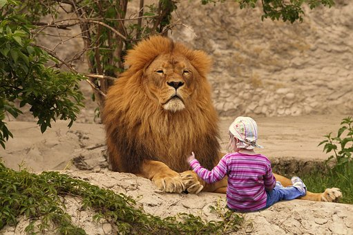 Lion, Zoo, Girl, Animal, Playmate, Friend, Child, Kid