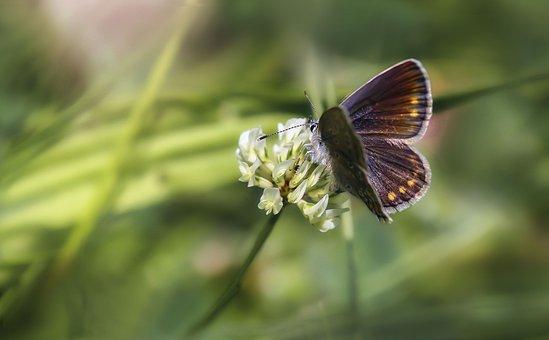 Butterfly, Wings, Insect, Butterfly Wings, Pollen