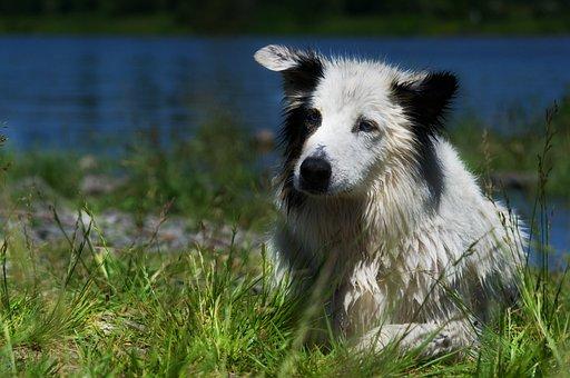 Dog, Pet, Animal, Domestic Dog, Canine, Mammal, Hybrid