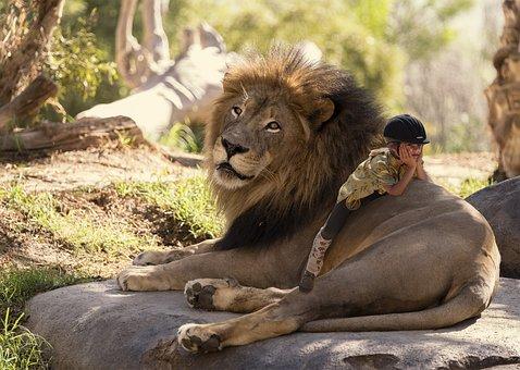 Lion, Zoo, Girl, Ride, Animal, Big Cat, Wild Animal