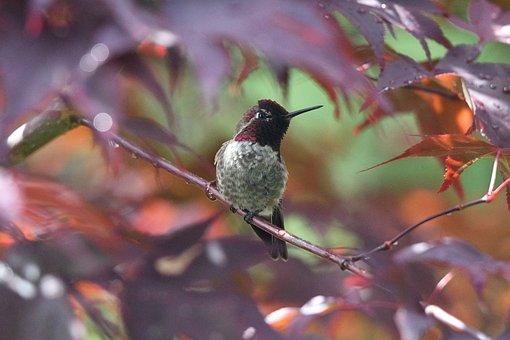 Hummingbird, Bird, Animal, Feathers, Branch, Bill, Beak