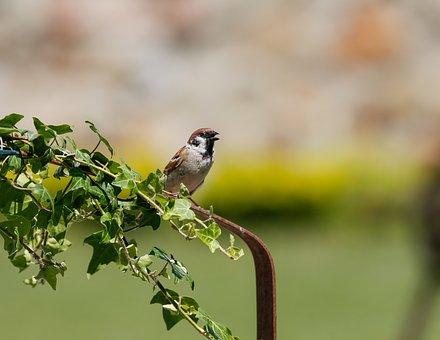 Sparrow, Bird, Animal, Feathers, Beak, Leaves