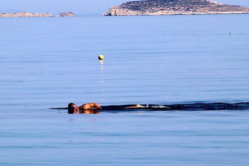 Swim, Sport, Sea, Swimmer, Swimming, Athlete, Water