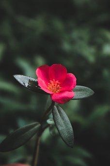 Flower, Daisy, Petals, Leaves, Foliage, Blossom, Spring