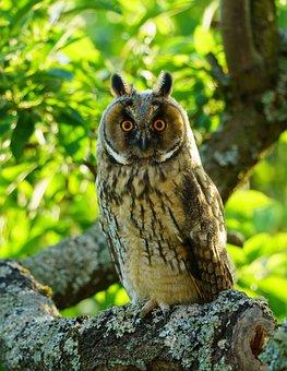 Eagle Owl, Owl, Bird, Branch, Perched, Animal