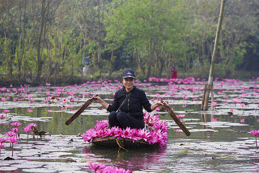 Lotuses, Flowers, Woman, Black Cap, Pink Flowers