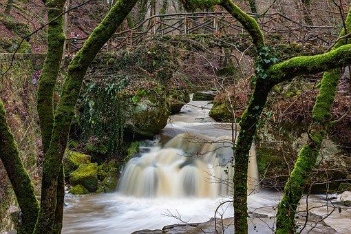 Waterfall, River, Forest, Bridge, Park, Trees, Moss