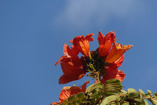 Flowers, Petals, Leaves, Foliage, Shrubs, Spring, Flora