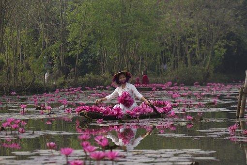 Lotuses, Flowers, Woman, White Dress, Hat, Pink Flowers