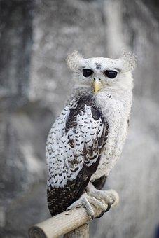 Barred Eagle Owl, Owl, Bird, Perched, Animal