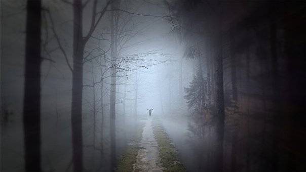 Forest, Trail, Fog, Trees, Dream, Mystical, Mood