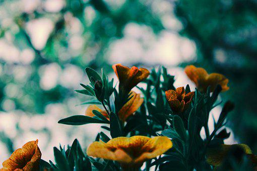 Flowers, Petals, Leaves, Foliage, Garden, Plant, Spring