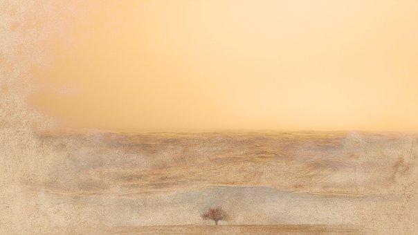 Tree, Sunset, Reflections, Solitary, Meditation
