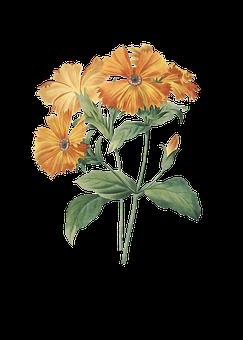 Marigold, Flowers, Plant, Orange Flowers, Bloom, Leaves