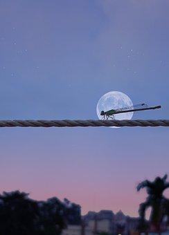 Damselfly, Rope, Moon, Insect, Nature, Closeup