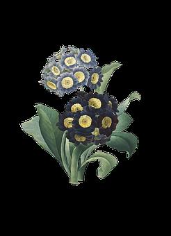 Flowers, Leaves, Plant, Bloom, Decorative, Decoupage