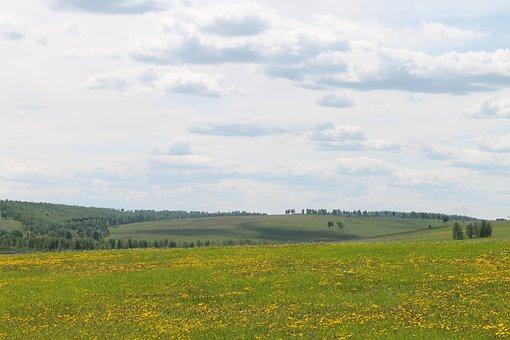 Flowers, Field, Hills, Dandelion, Meadow, Landscape