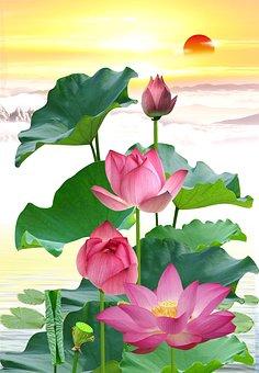 Lotuses, Flowers, Lotus Flowers, Pink Flowers, Petals