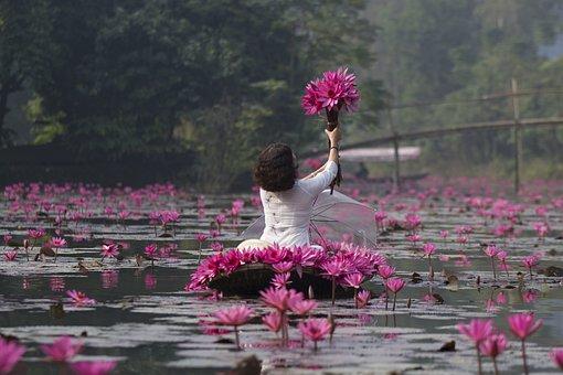 Lotuses, Flowers, Woman, White Dress, Umbrella