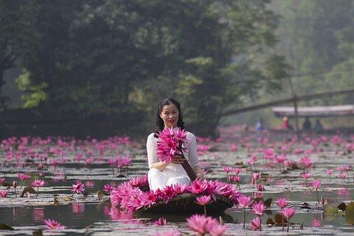 Lotuses, Flowers, Woman, White Dress, Pink Flowers