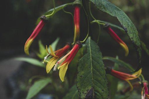 Lobelia, Flowers, Plant, Petals, Bloom, Leaves, Garden