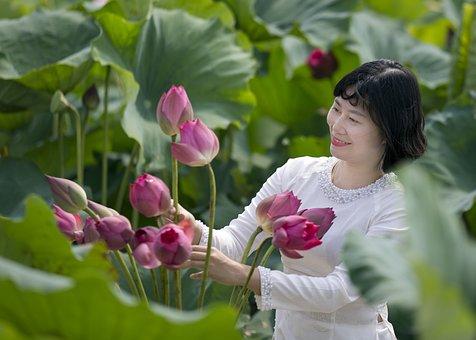 Woman, Lotuses, White Dress, Flowers, Lotus Garden