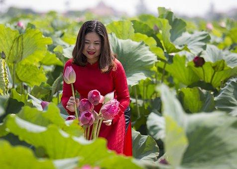Woman, Lotuses, Dress, Flowers, Lotus Garden
