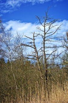 Tree, Aesthetic, Kahl, Dead Plant, Sky, Winter