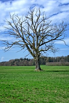 Tree, Kahl, Aesthetic, Crown, Bare Tree, Branches