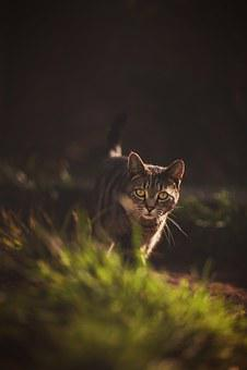 Cat, Prowl, Garden, Light, Animal, Prowling, Feline