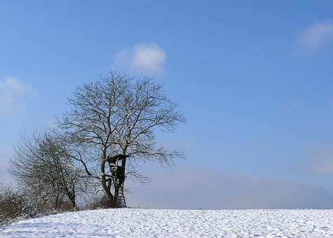 Winter, Trees, Snow, Winter Trees, Wintry, Cold, Nature