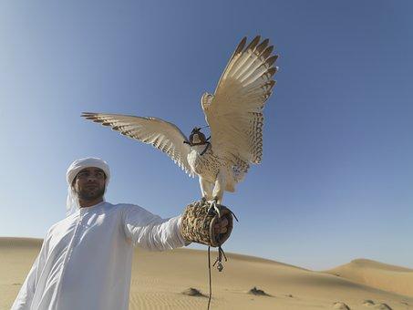 Falcon, Uae, Desert, Hunter, Claws, Falconry, Feathers