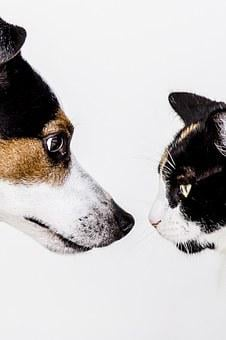 Cat, Dog, Animals, Pet, Nature, Doggy, Jackrussell