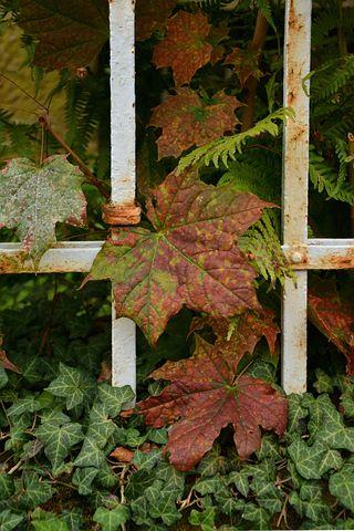 Fall Leaves, Fall Foliage, Fall Color, Autumn, Leaves