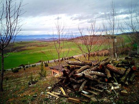 Lena, Trunks, Field, Fence, Fenced, Gate, Landscape