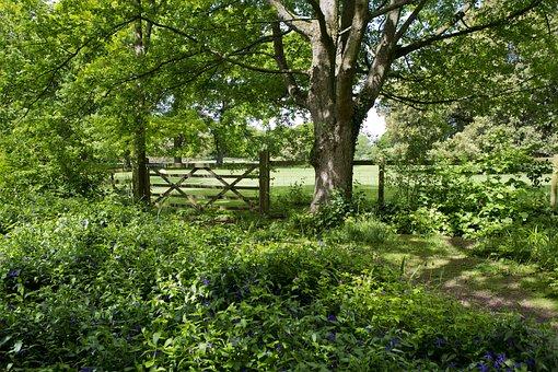 Woodland Walk, Old Oak Tree, Field Gate, Fence, Pasture