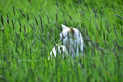 Cat, Grass, Green, Domestic Cat, Animal, Mieze, Lurking