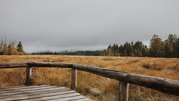 Moor, Harz Mountains, Away, Hiking, Path, Wall