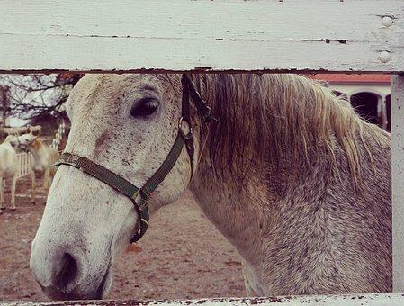 Horse, White, Wooden, White Horse, Farm, Outdoors