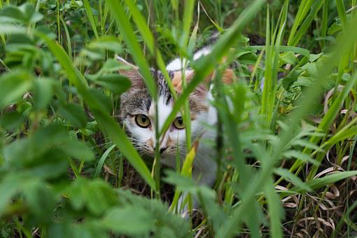 Cat, Sneaks, Hunter, Grass, Multi Color