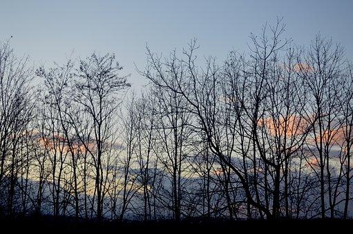 Forest, Winter, Nature, Tree, Landscape, Bare Shaft