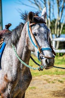 Horse, Animal, Load, Horse Riding, Nature, Love Animals