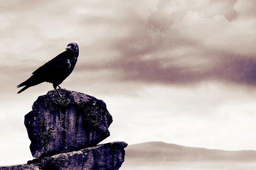 Birds, Gray, Nature, Rock, Rough, Sad, Hunter, Look