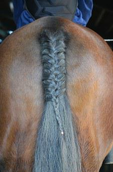 Horse, Tail, Animal, Brown, Sport, Riding, Pony, Stable