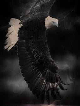 Bald Eagle, King Of The Air, Bird, Predator, Feathered