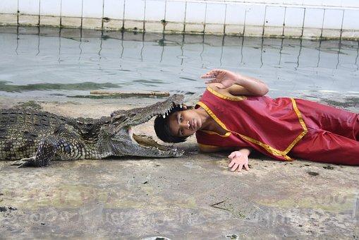 Fakir, Crocodile, Show, Animal, Dangerous, Danger