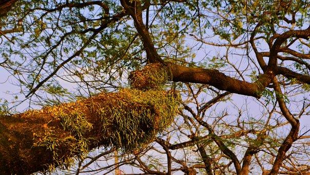 Tree, Evening, Under, Green, Season, Spring, Sky, Brown